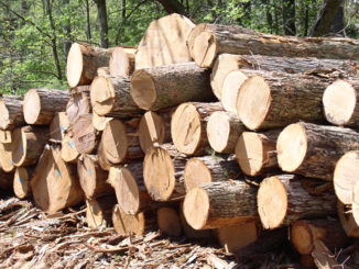 Forestry Commission clamps down on illegal lumbering