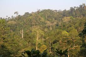 Two timber firms depleting the Tindibu Forest Reserve