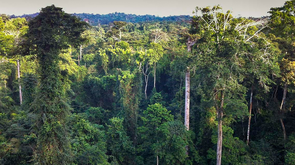 Economic Importance of the Forestry sector